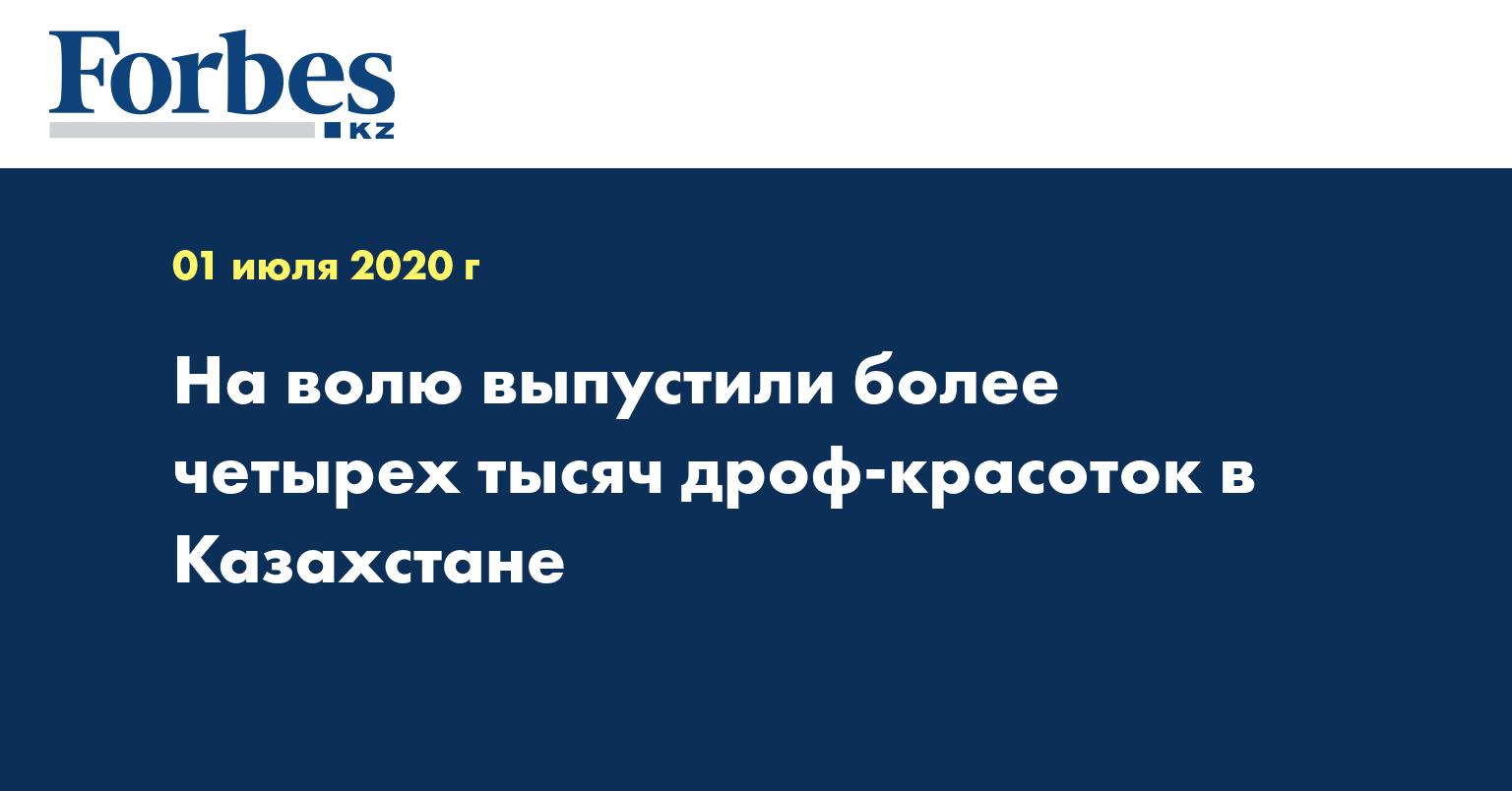 На волю выпустили более четырех тысяч дроф-красоток в Казахстане