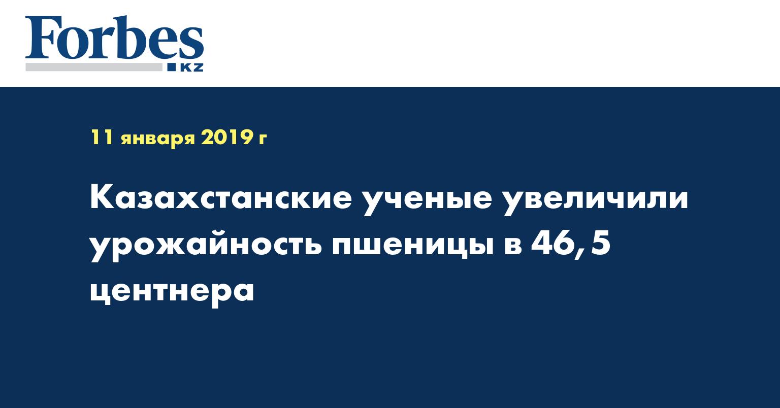 Казахстанские ученые увеличили урожайность пшеницы в 46,5 центнера
