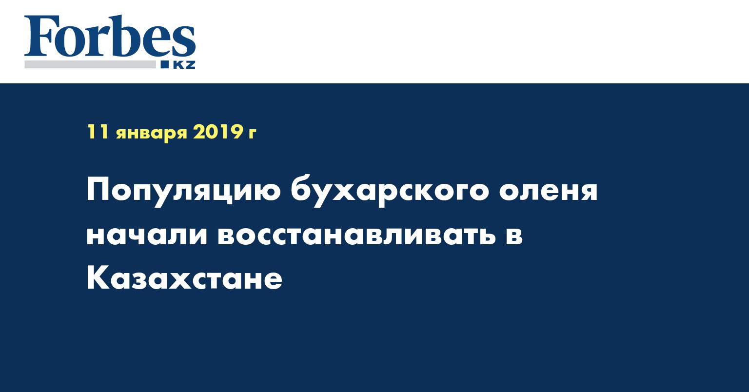 Популяцию бухарского оленя начали восстанавливать в Казахстане