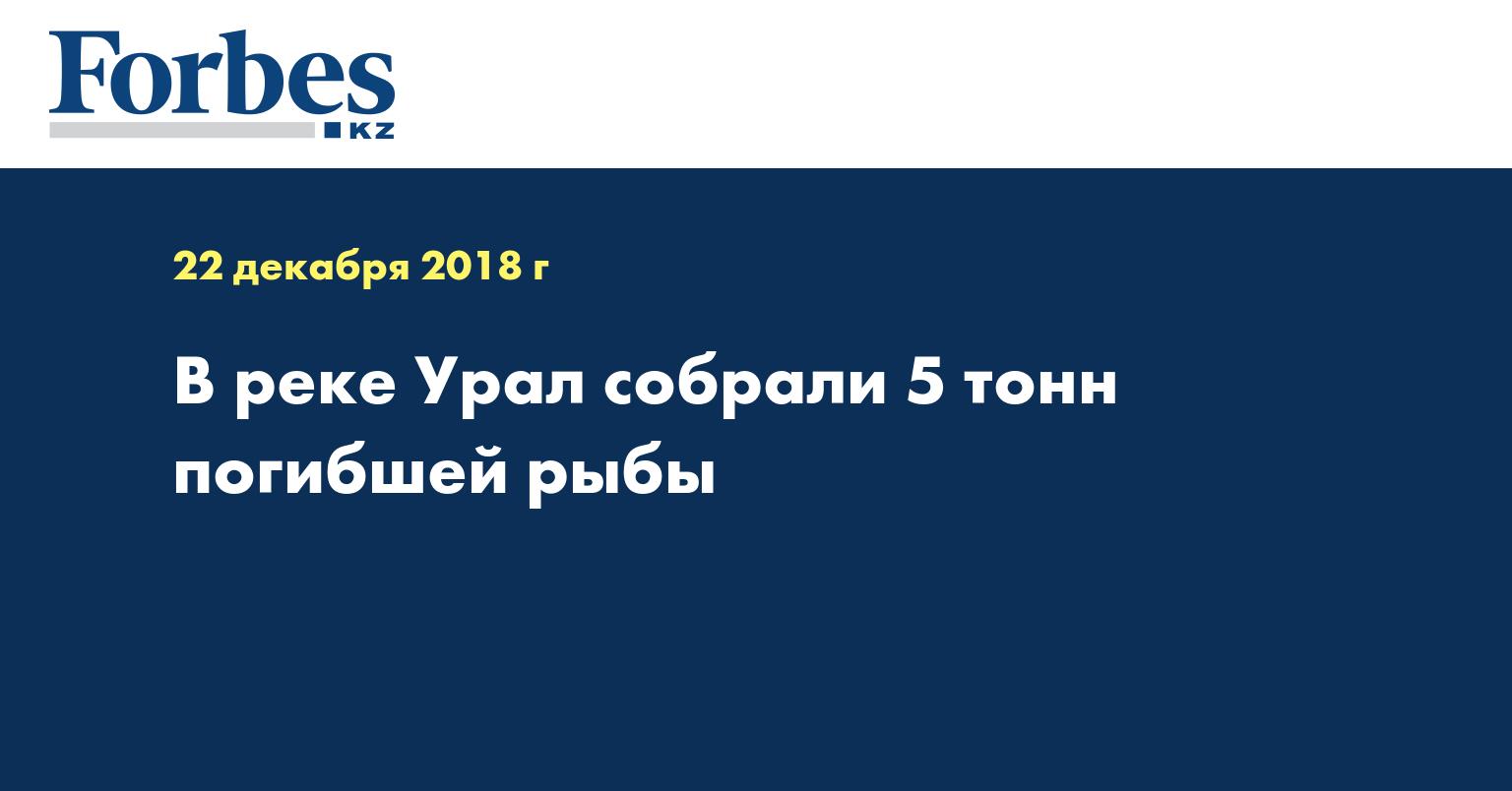 В реке Урал собрали 5 тонн погибшей рыбы